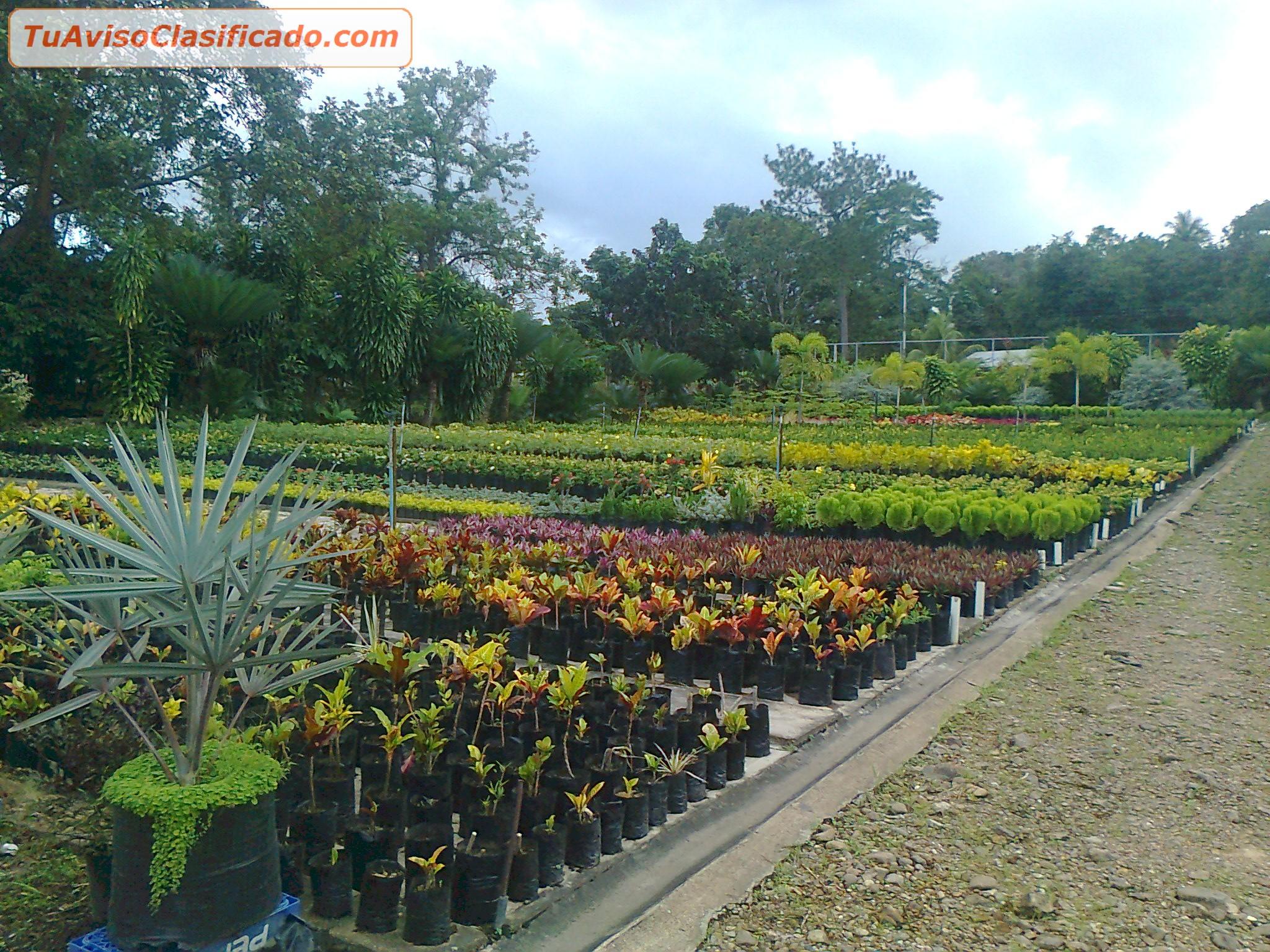 Vivero y proyectos de jardineria y ornatos jard n y for Proyecto productivo de vivero forestal