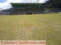 Bermuda grass - semilla campos deportivos