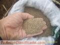 semillas-pastos-brachiarias-colombia-1.jpg