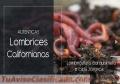 Lombrices Rojas californianas en Venezuela, Lombricultura Barquisimeto.. tlf 04267093908