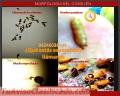 Fumigacion para Empresas Eliminamos Insectos Masticadores